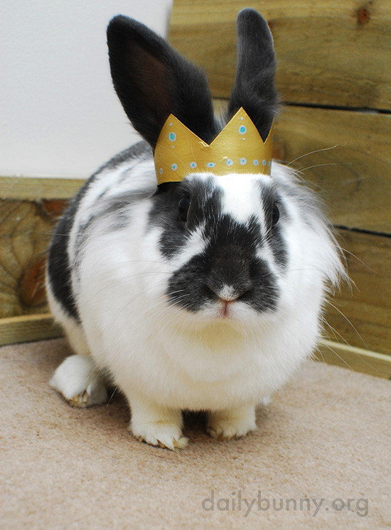 All Hail King and Queen Bunny! 4