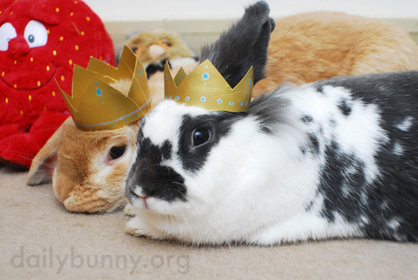 All Hail King and Queen Bunny! 5
