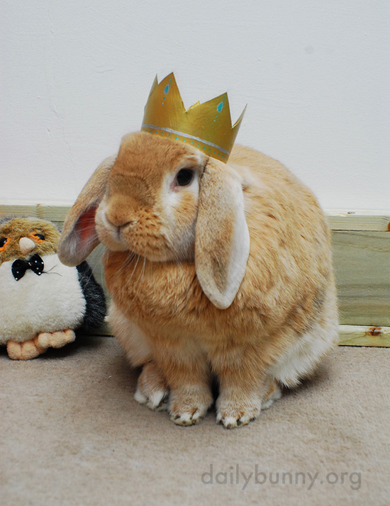 All Hail King and Queen Bunny! 7