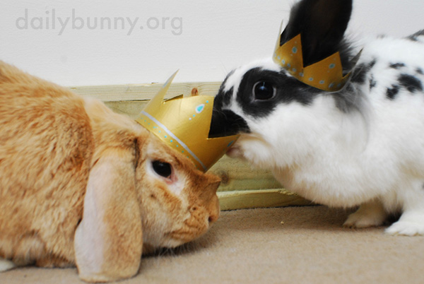 All Hail King and Queen Bunny! 8