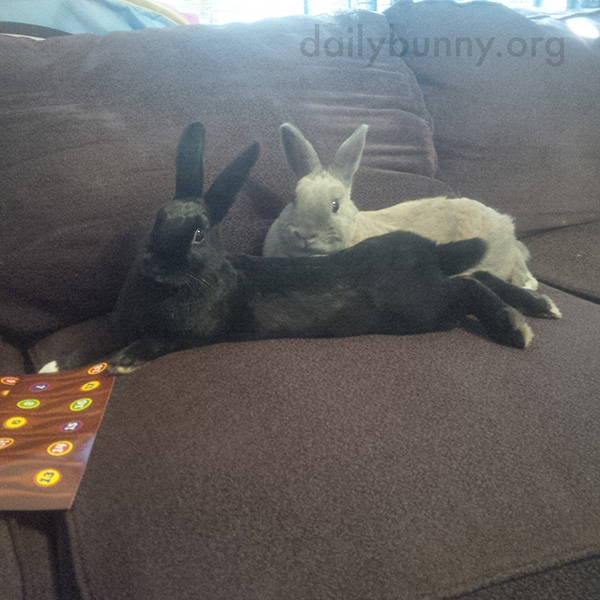 Bunnies Make Themselves Comfortable for a TV Session