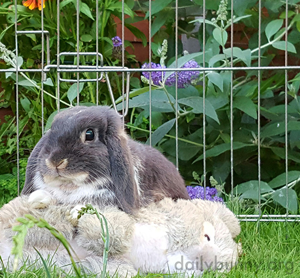 Bunny Enjoys the Outdoors with His Plush Friend