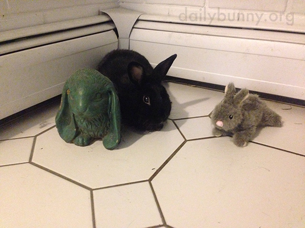 Bunny Hangs Out with a Couple of Pals