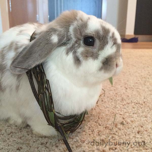 Bunny Has Found an Easy Way of Transporting His Chewy Toy Around with Him