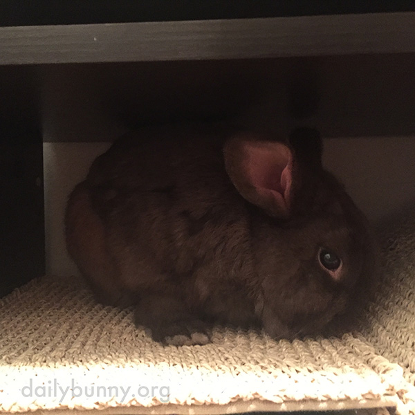 Bunny Lurks in the Shadows