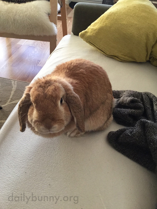 Bunny Prefers to Nap Next to Her Human 1