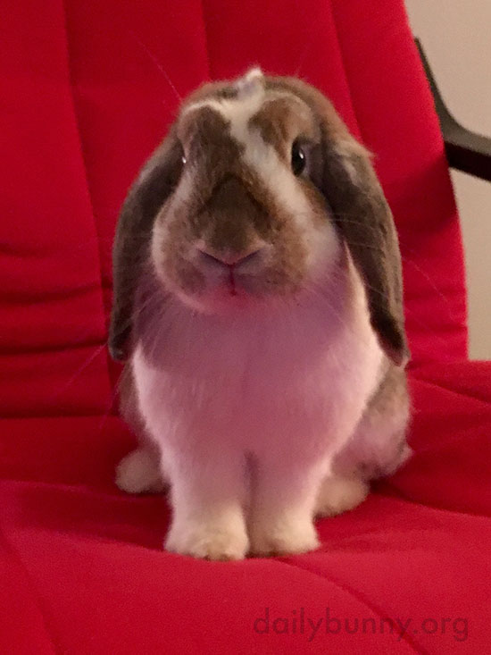 Bunny Sits So Nicely on Human's Chair