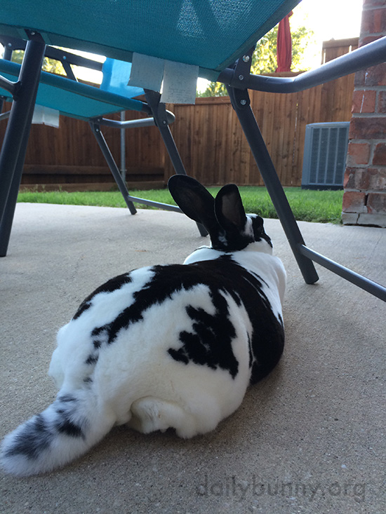 Bunny Stretches Out on the Cool Pavement