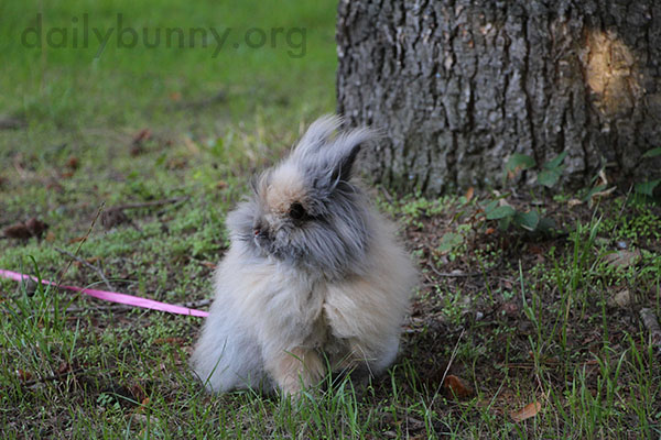 Bunny Would Rather Just Hang Out by the Tree, Okay? 2