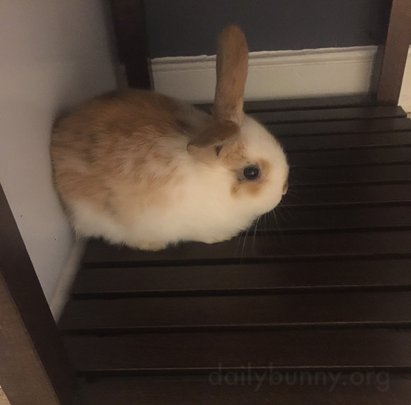 Bunny's Found a Nice Cool Surface to Rest On