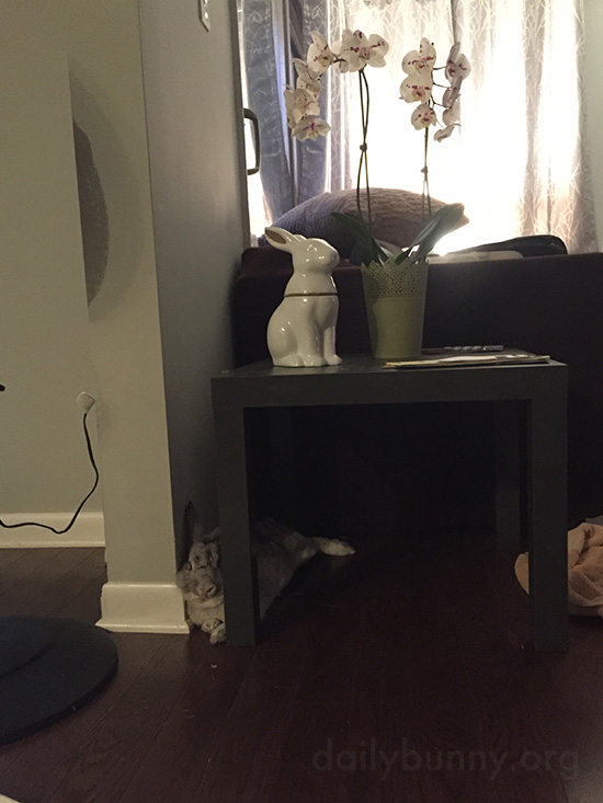 Bunny's Resting Spot Was Chosen for Comfort and Surveillance