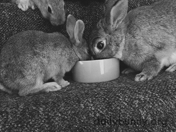 Mother and Baby Bunny Share a Meal