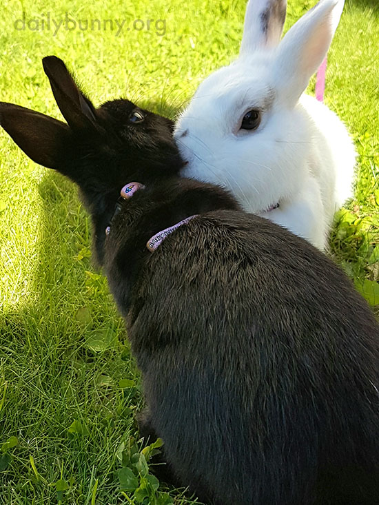 Bunnies Share Some Time - and a Kiss - in the Sun 2