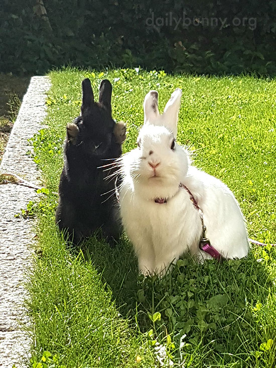 Bunnies Share Some Time - and a Kiss - in the Sun 3