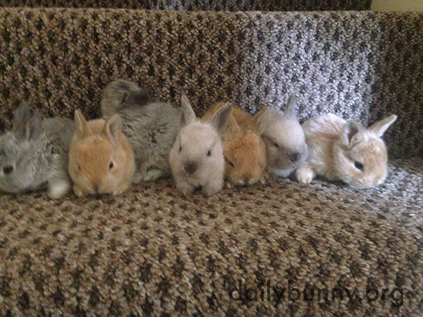 Bunnies Stand for a Lineup Photo... Kind Of