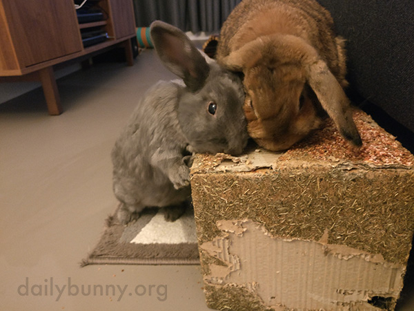 Bunnies Team Up on a Snack Box