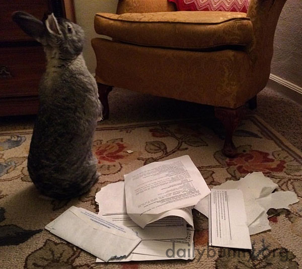 Bunny Looks for More Mail to Destroy