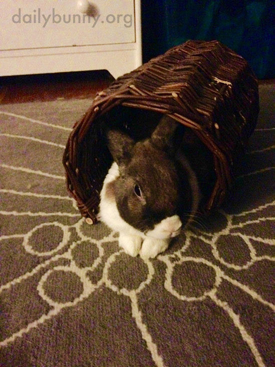 Bunny Relaxes in a Wicker Tube 1