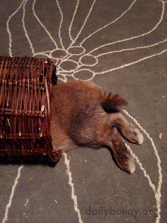 Bunny Relaxes in a Wicker Tube 2