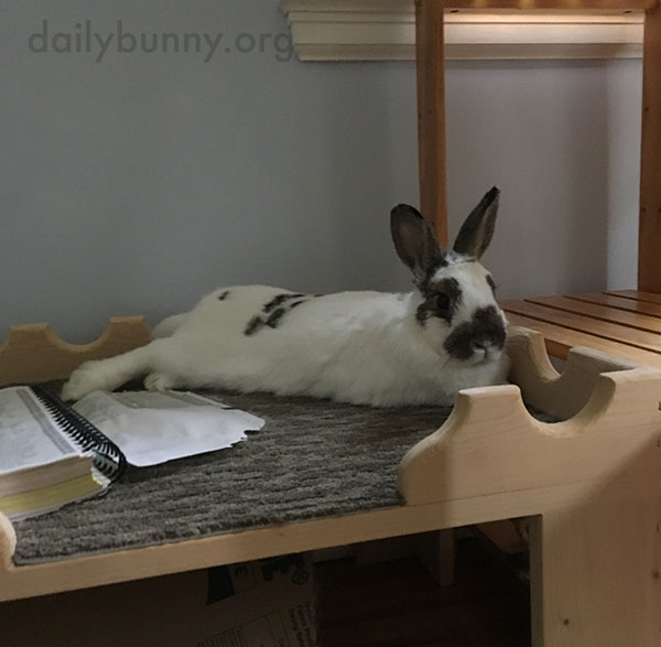 Bunny Rests from the Hard Work of Book Destruction