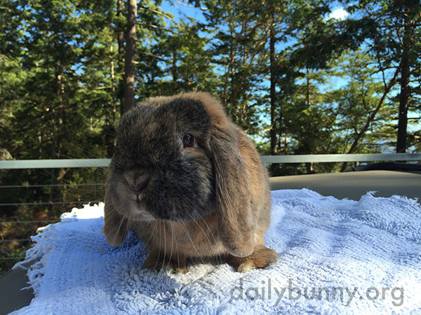Bunny Visits the Outdoor Spa