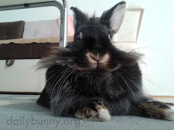 Bunny, You Look So Dignified!