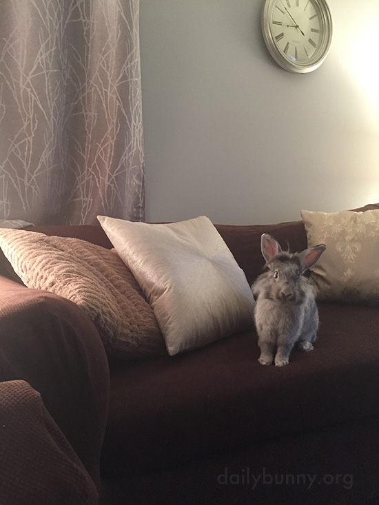 Salesbunnies Model the Furniture 1