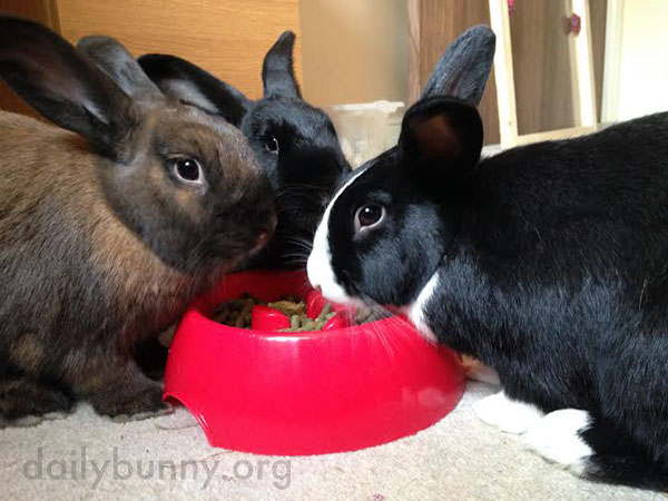 These Bunnies Are So Good at Sharing 1