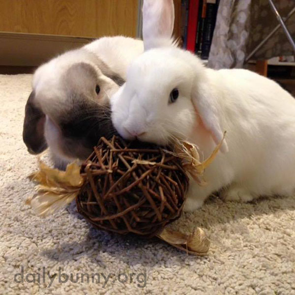 These Bunnies Are So Good at Sharing 2