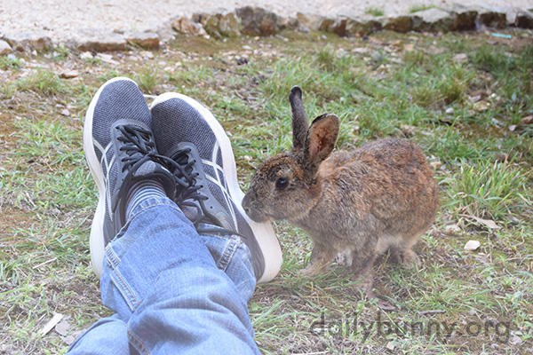 Wild Bunny Finds Human's Shoes Very Interesting