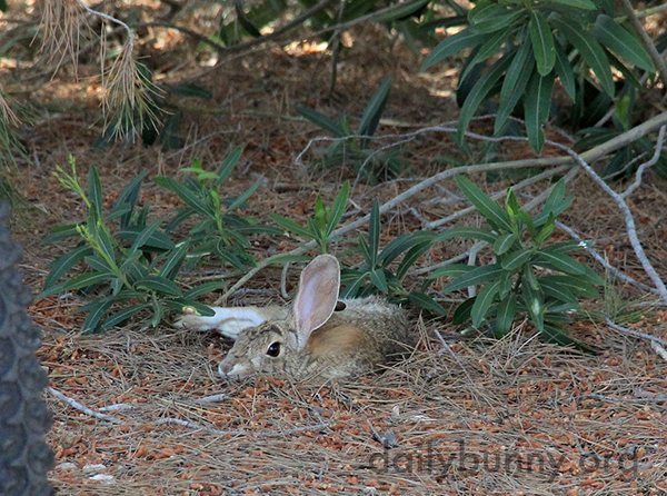Wild Bunny Knows How to Relax 1