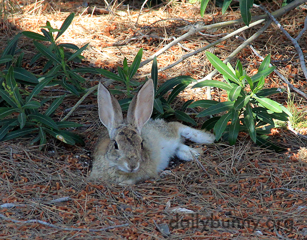 Wild Bunny Knows How to Relax 2