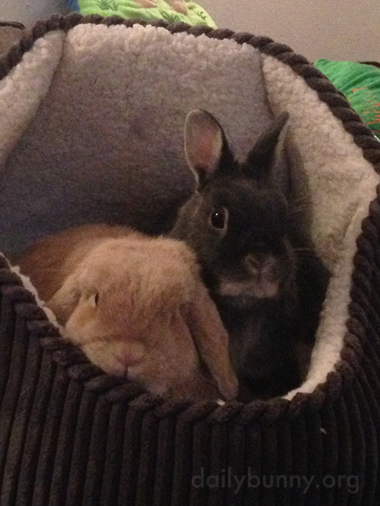 Bunnies Cozy Up in a Comfy Bed 1