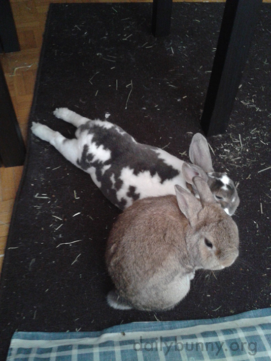 Bunnies Hang Out Together