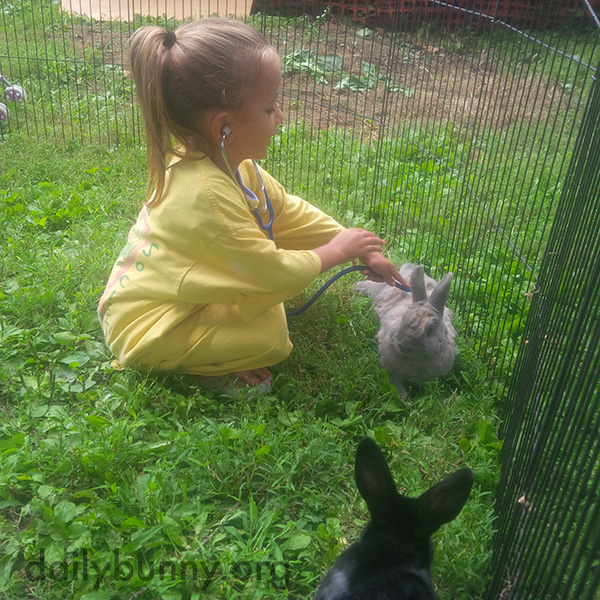Bunnies Have a Very Conscientious Vet 1