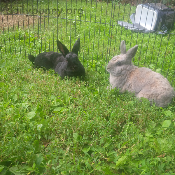 Bunnies Have a Very Conscientious Vet 4