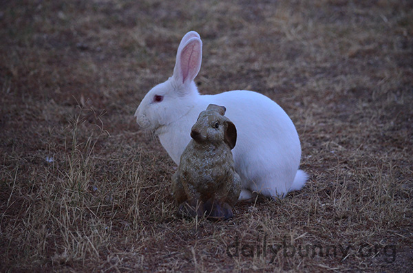 Bunny Finds a Familiar Face in the Yard