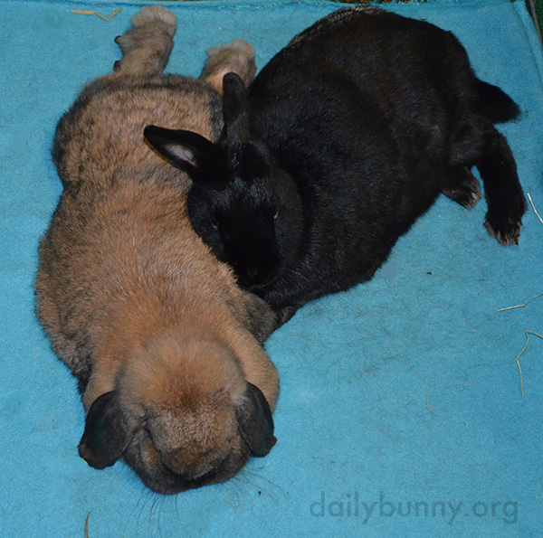Bunny Friends Can Always Lean on Each Other 1