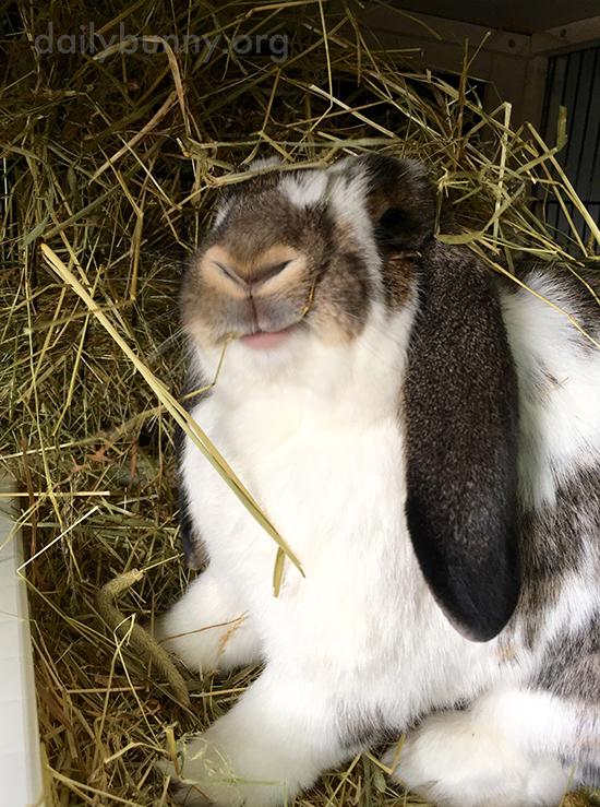Bunny Is in Hay Heaven