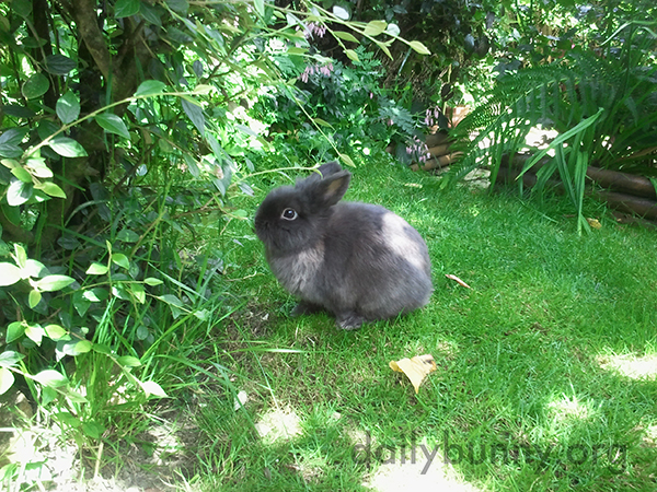 Bunny Soaks In All the Lush Greenery