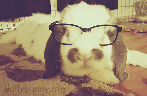 Bunny, You Look So Sharp in Those Glasses!