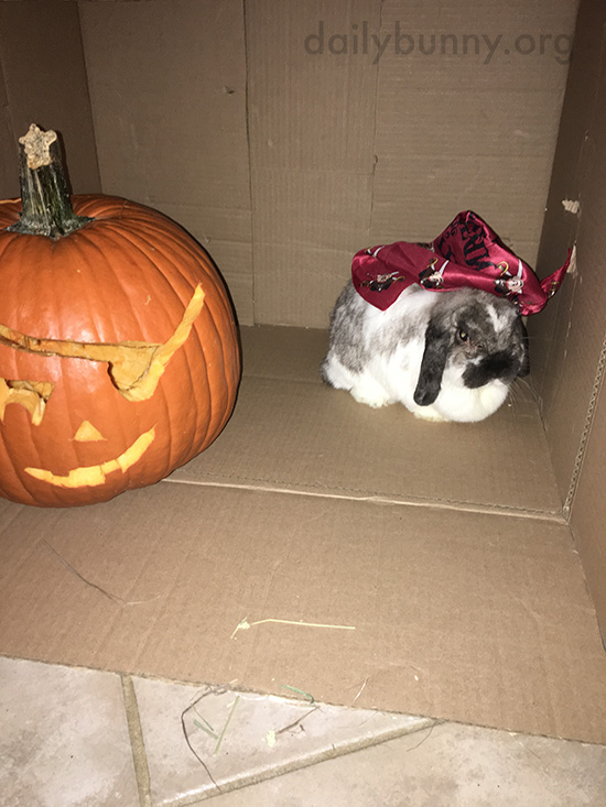 It's the Daily Bunny's Halloween 2016 Post! 1