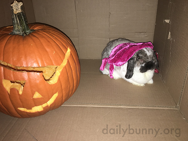 It's the Daily Bunny's Halloween 2016 Post! 2