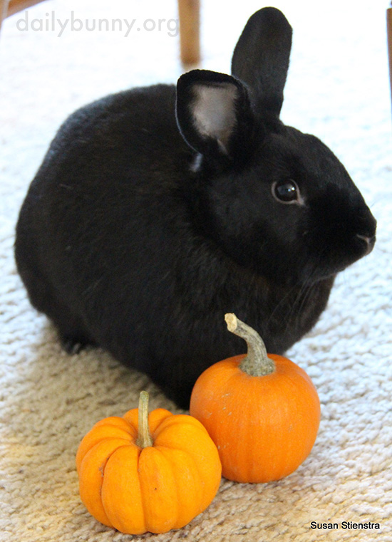 It's the Daily Bunny's Halloween 2016 Post! 4
