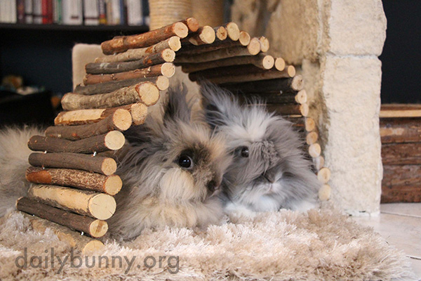 Lucky Bunnies Have Lots of Huts 1