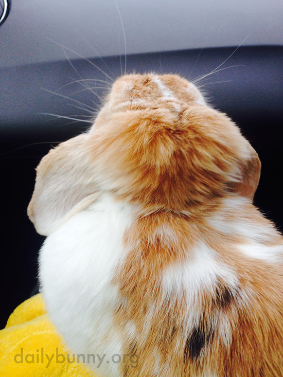 The Spiky Fur on the Back of Bunny's Head Is Extra-Super-Soft 1