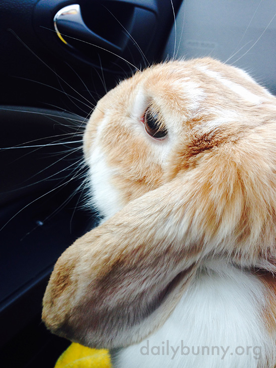 The Spiky Fur on the Back of Bunny's Head Is Extra-Super-Soft 2