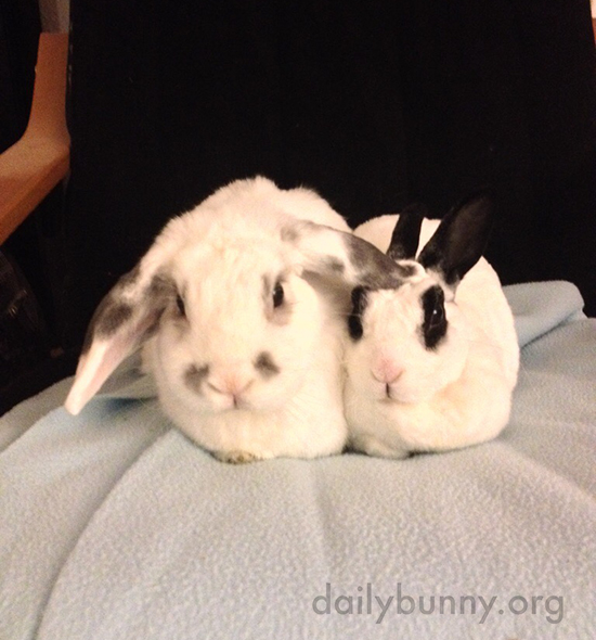 Bunny Gives His Friend a Pat on the Head with His Ear