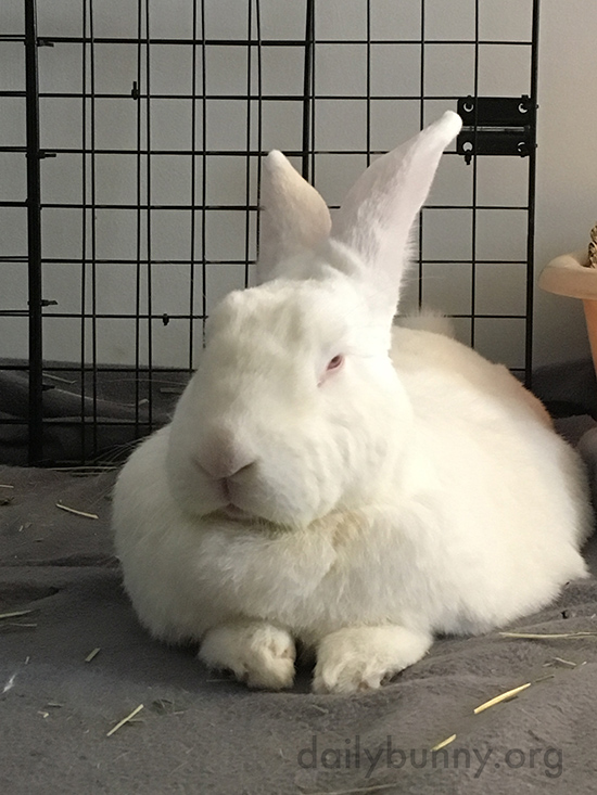 Bunny Gives His Human the Stinkeye