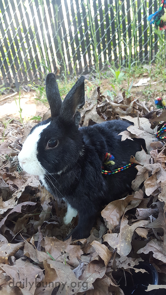 Bunny Has a Good Time Playing in the Leaves